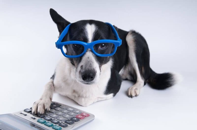 Roger Menden's Under-Utilized Pet Tax Deductions - Accountant, Accounting, Tax Services, Tax Preparation Shakopee MN